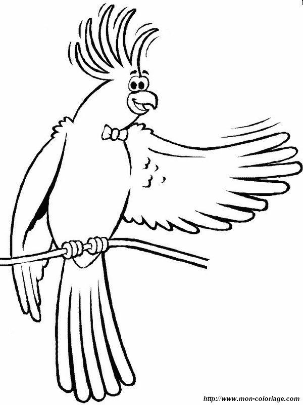Colorear Aves Dibujo Cacatua Dice Hola