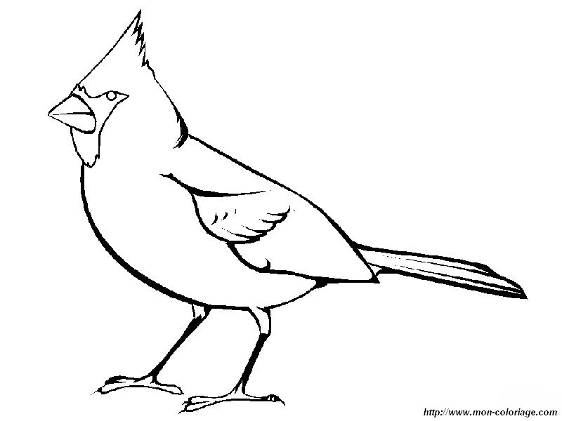 cardinals coloring pages with multiplication | Colorear Aves, dibujo cardenal