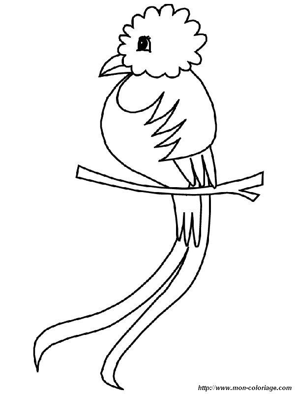 Colorear Aves, dibujo el quetzal