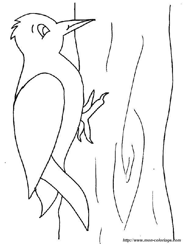 Colorear Aves dibujo pajaro carpintero
