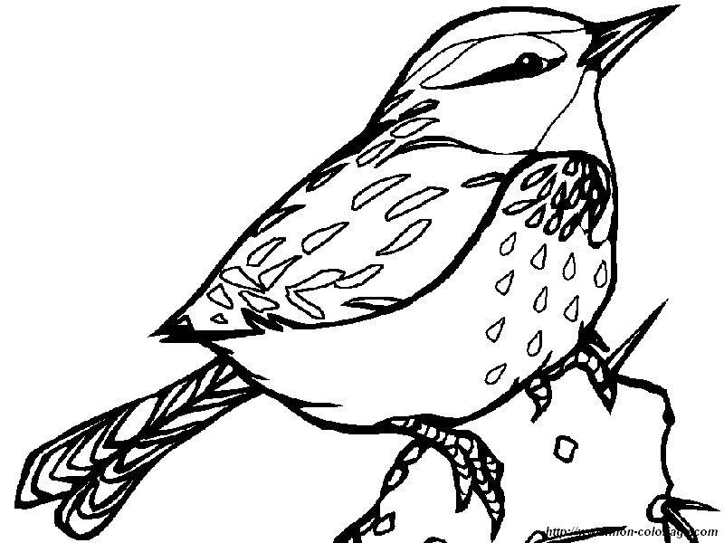 Colorear Aves, dibujo sobre un cactus