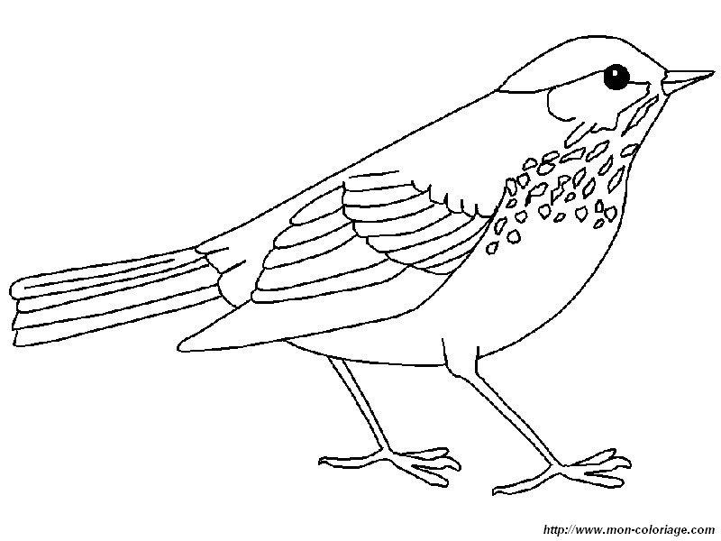 colorear aves, dibujo tordo