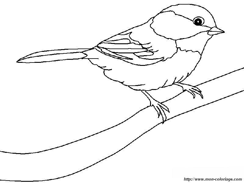 Colorear Aves, dibujo un gorrion