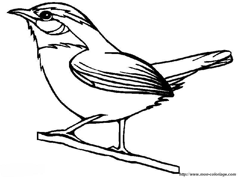 Colorear Aves Dibujo Una Alondra