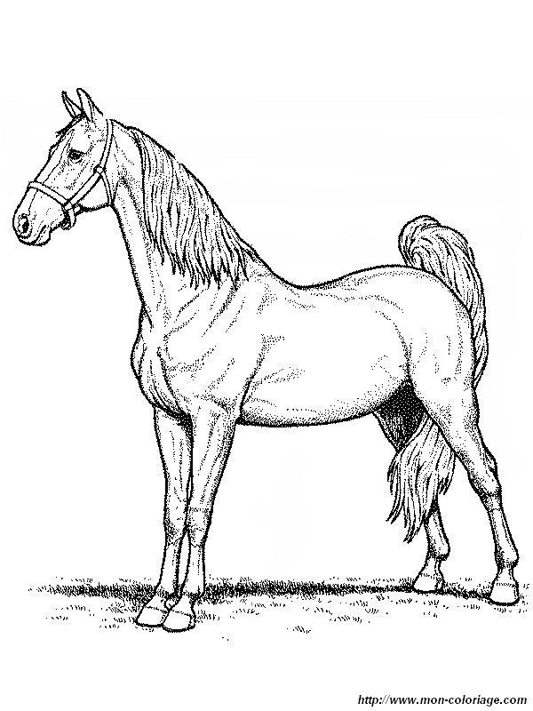 Colorear Caballo, dibujo un majestuoso caballo