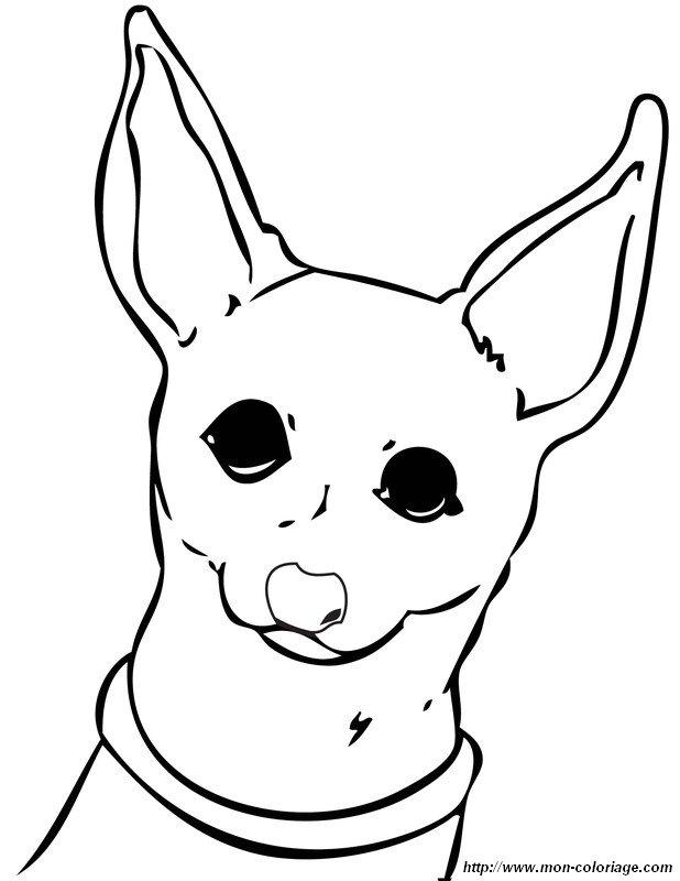 Colorear Perros, dibujo chihuahua mexicano