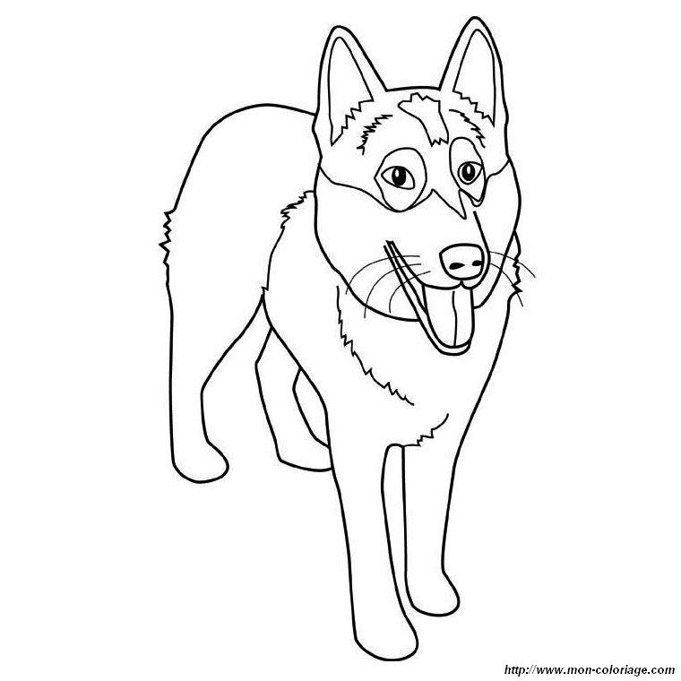 Colorear Perros, dibujo el husky siberiano
