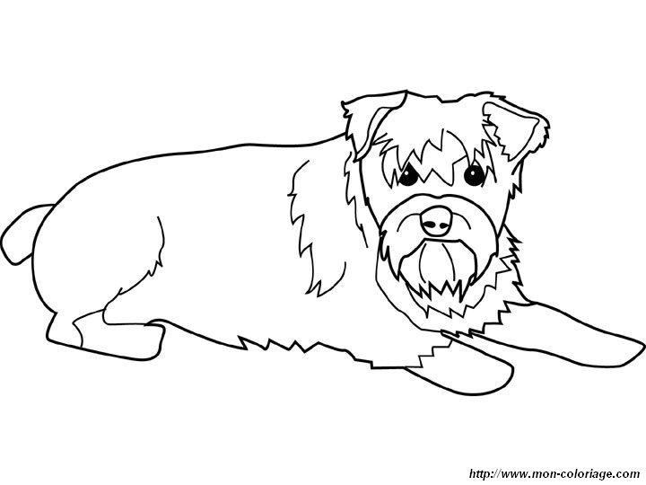 Colorear Perros, dibujo schnauzer estandar