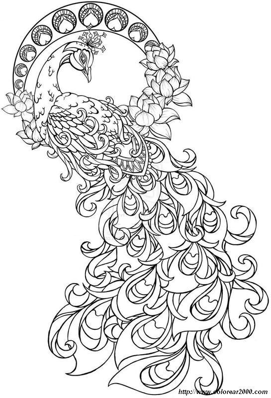 Colorear Para adultos, dibujo Un bonito pavo real